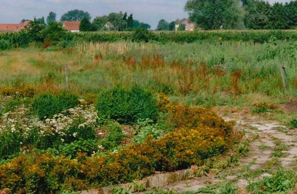 Labyrint 2009